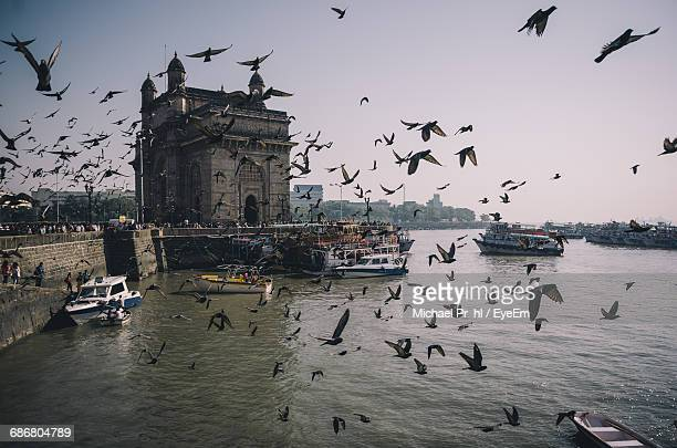 Pigeons Flying Against Gateway Of India
