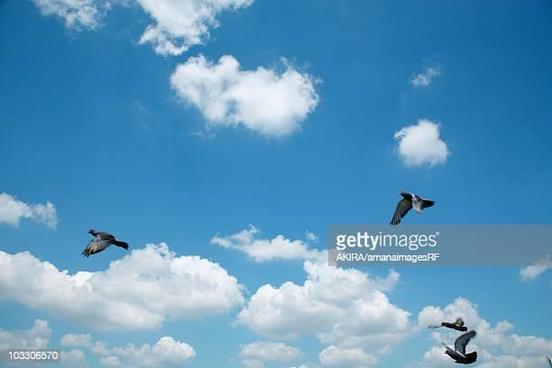 pigeons flying in a blue sky, ota ward, tokyo, japan - asa akira imagens e fotografias de stock