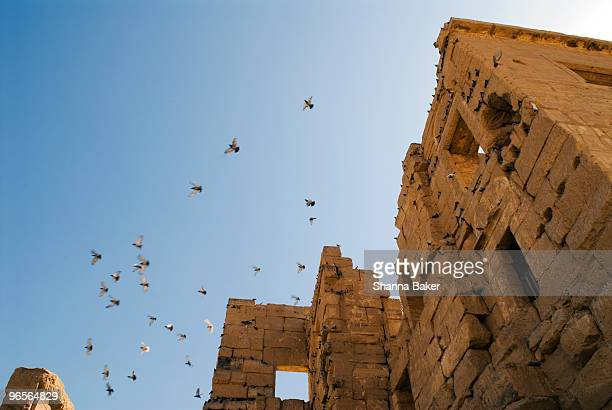 Pigeons flying off Egyptian ruins