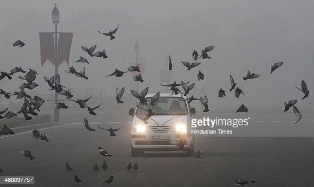 Pigeons flying on cold and foggy day on the first day of New Year 2014 at Vijay Chowk on January 1 2014 in New Delhi India Due to clouds and rain the...