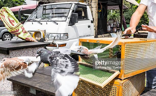 pigeons flying out from cage - releasing stock pictures, royalty-free photos & images