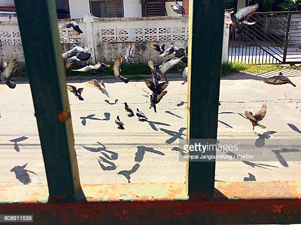 Pigeons Flying Over Street Seen From Rusty Metallic Gate