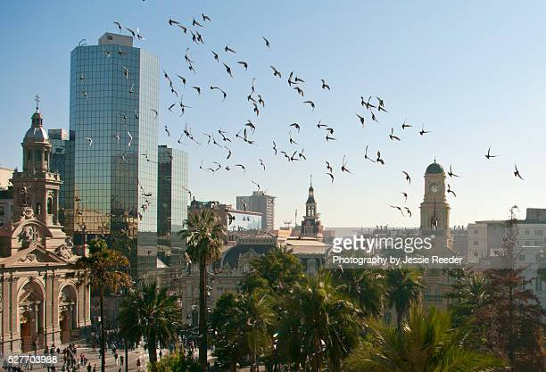 Pigeons flying through center of Santiago, Chile