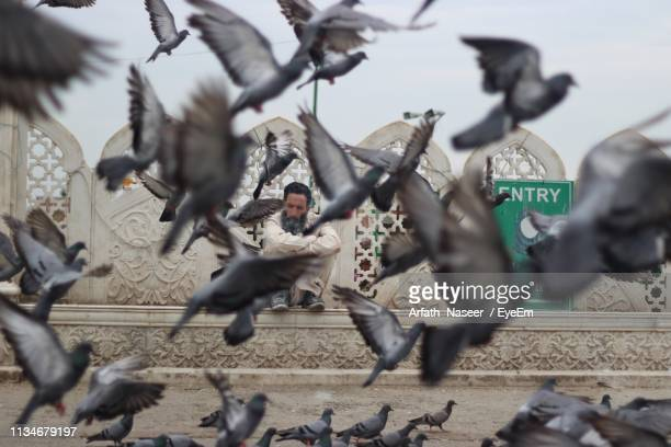 pigeons flying while man sitting outdoors - kashmir valley stock pictures, royalty-free photos & images