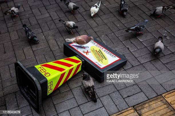 Pigeons gather around a knocked over sign that says do not feed wild birds in Hong Kong on June 7, 2020.