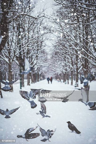 Pigeons in a wintery scenery.