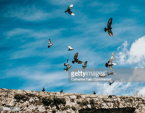 Pigeons in flight, against a blue, cloudy sky.