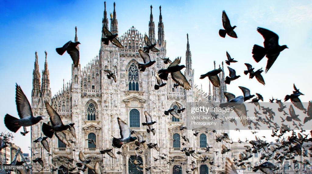 Pigeons in Flight Against Duomo in Milan, Italy : Stock-Foto