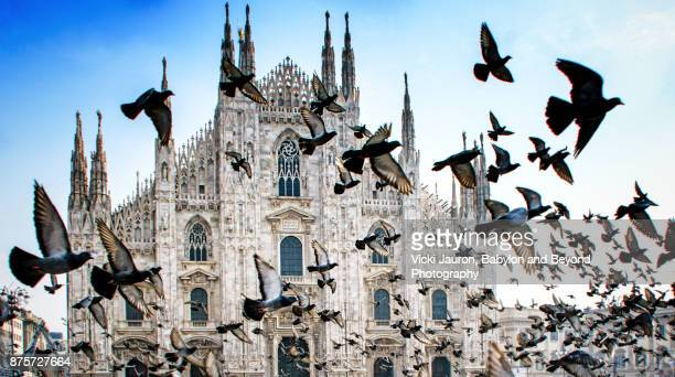 pigeons in flight against duomo in milan, italy - katholicisme stockfoto's en -beelden