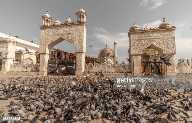 Pigeons in front of Hazratbal Shrine, Srinagar