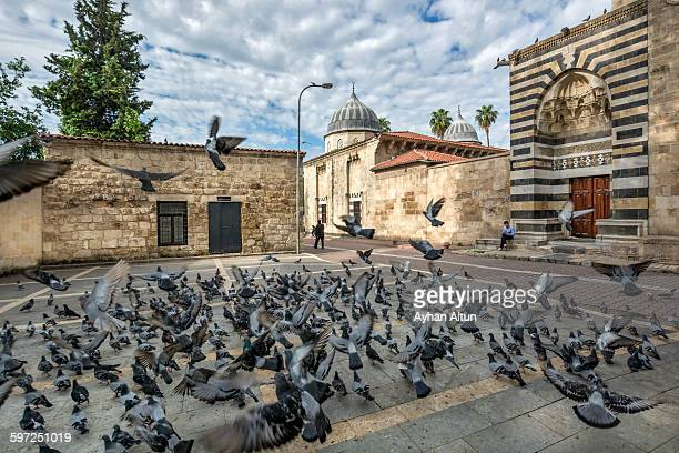 Pigeons in front of The Ulucami Mosque in Adana