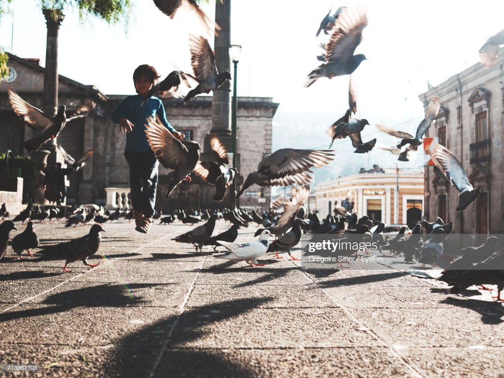 Pigeons In The City : Stock Photo