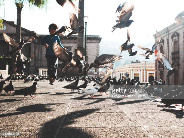 pigeons in the city - quetzaltenango stock-fotos und bilder