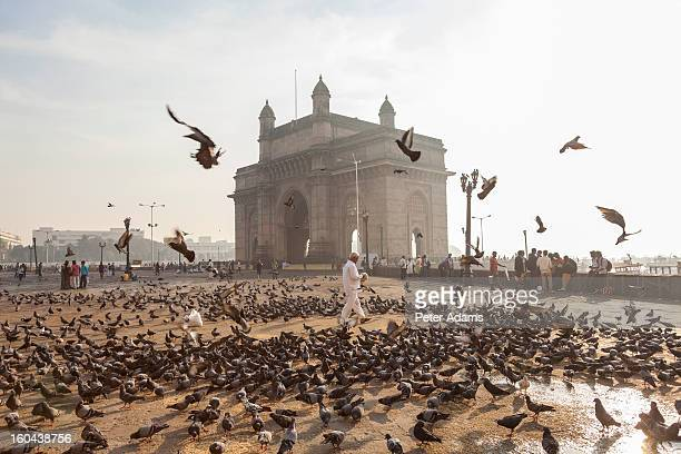 pigeons, india gate, colaba, mumbai, india - india gate stock pictures, royalty-free photos & images