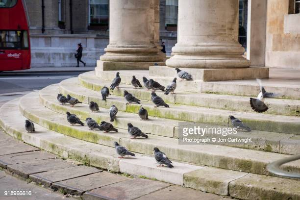 Pigeons on church steps in London