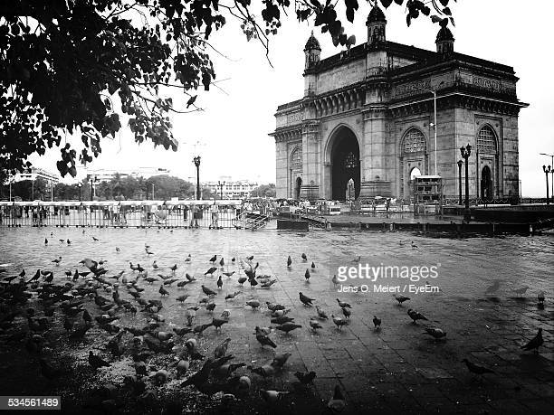 Pigeons On Street Against Gateway Of India