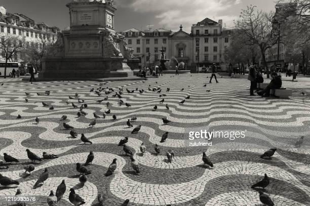 歩道の鳩 - バイシャ ストックフォトと画像