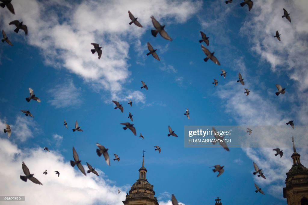 Pigeons overfly Bolivar Square during a demonstration to ask for 24 hours without any violent death in Bogota on October 1, 2011. In 2010 Colombia had a homicide rate of 38.36 per 100,000 inhabitants, placing this country as one of the most violent in Latin America, behind Venezuela (48 per 100,000) but ahead of Mexico (22 per 100,000 ). AFP PHOTO/Eitan Abramovich /