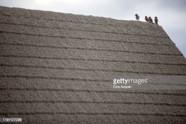 Pigeons perch on top of a hut covered in volcanic ash from Taal Volcano's eruption inside a closed amusement park on January 17 2020 in Tagaytay city...
