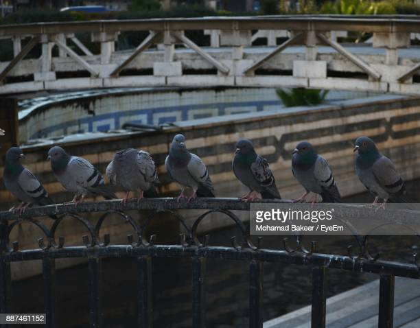 Pigeons Perching On Gate Against Canal