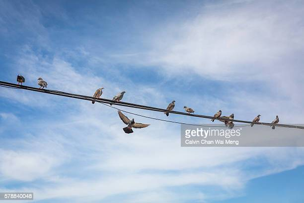 Pigeons perching on wire