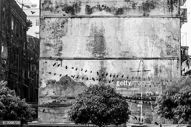 pigeons resting on electric wire - merten snijders stockfoto's en -beelden