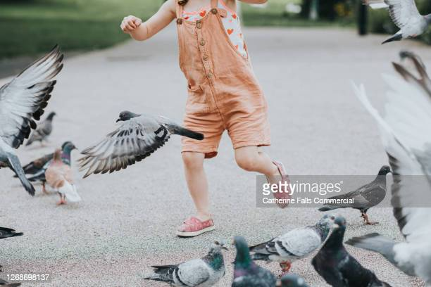 pigeons scatter as child runs towards them - outdoor pursuit stock pictures, royalty-free photos & images