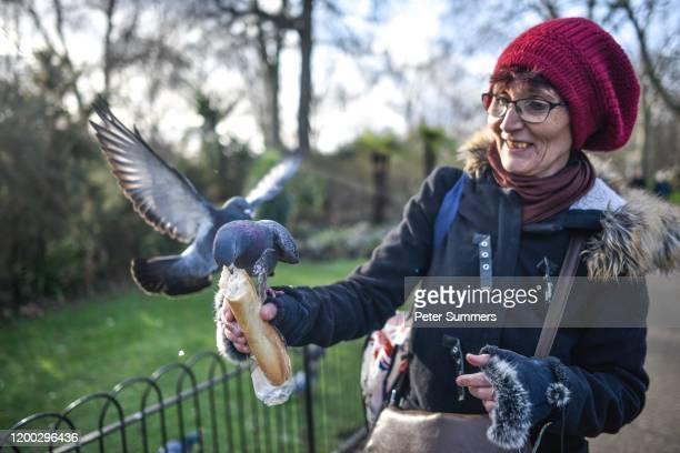 Pigeons sit on a woman's arms as they eat a baguette on a sunny day in St James' Park on February 12 2020 in London England High winds rain and snow...
