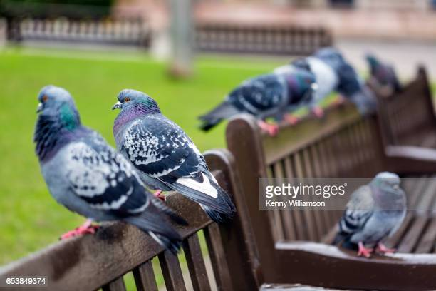 Pigeons sitting on a city bench