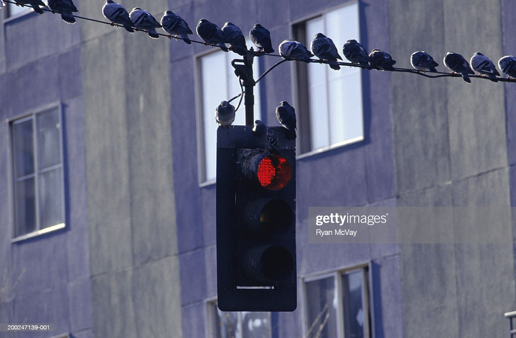 Pretty Lester Wire Traffic Light Pictures Inspiration - Electrical ...