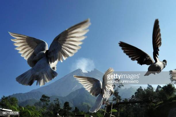 TOPSHOT Pigeons take to the air as Merapi volcano continues to emit smoke from its crater on June 4 2018 after spewing volcanic ash for days as seen...