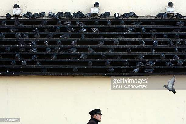 Pigeons warm themselves on the metro ventilation shaft in central Moscow on December 18 2012 The temperatures in Moscow dropped today's morning to...