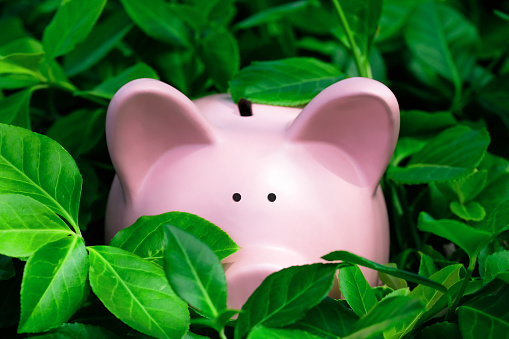 Piggy Bank Hiding in the Bushes - gettyimageskorea