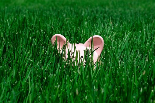 Piggy Bank Hiding in the Grass - gettyimageskorea