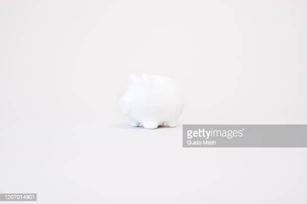 piggy bank in front of white background. - animal representation stock pictures, royalty-free photos & images