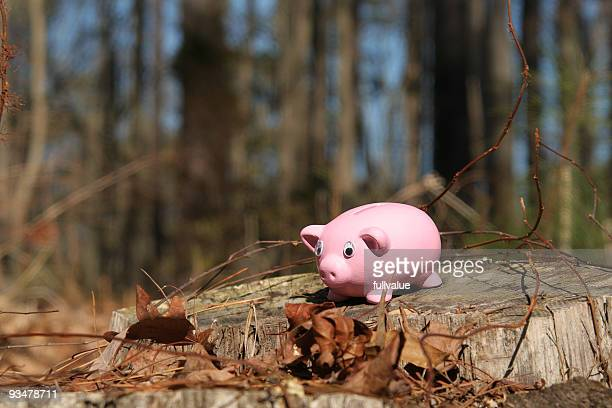 Piggy Bank: Lost in Woods