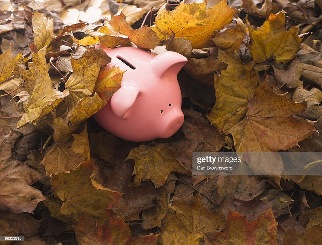 Piggy bank on leaves : Stock Photo