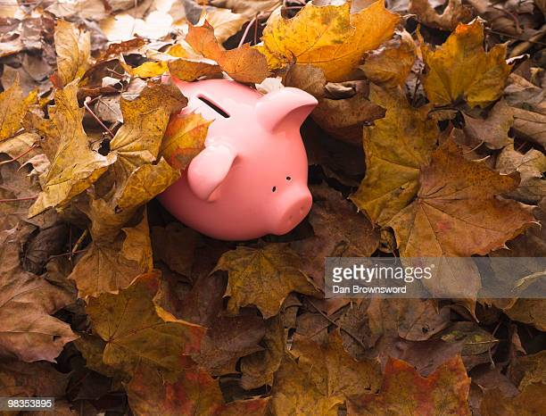 Piggy bank on leaves