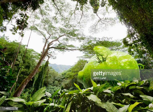 piggy bank rain forest hidden savings - chance stock pictures, royalty-free photos & images