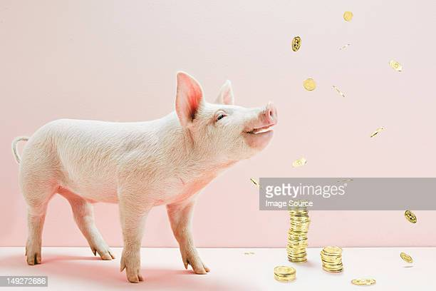 Piglet and falling coins