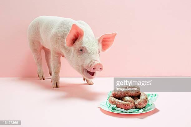piglet looking at plate of sausages in studio - finale stockfoto's en -beelden