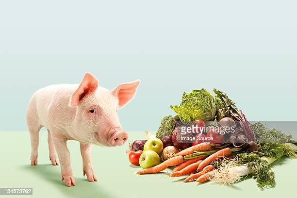 Piglet near fresh vegetables in studio