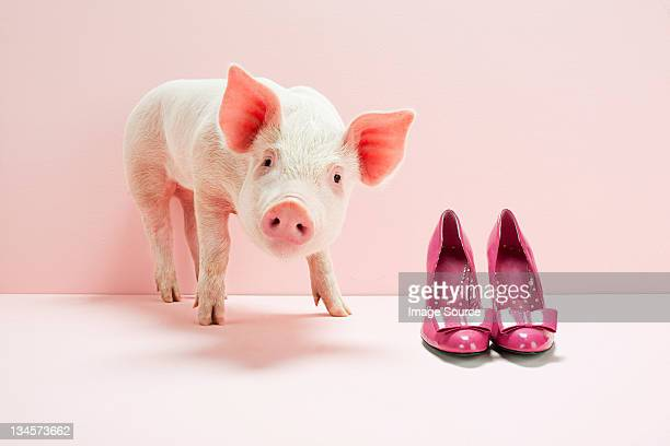 Piglet next to shoes in pink studio