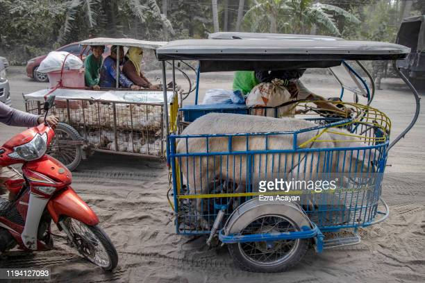 Pigs and chickens are transported on rickshaws at a checkpoint after residents were briefly allowed to return to their homes to retrieve belongings...