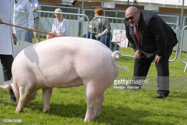 Pigs are judged at the 125th Devon County Show at the Westpoint Arena and Showground in Clyst St Mary near Exeter on July 02, 2021 in Devon, England....