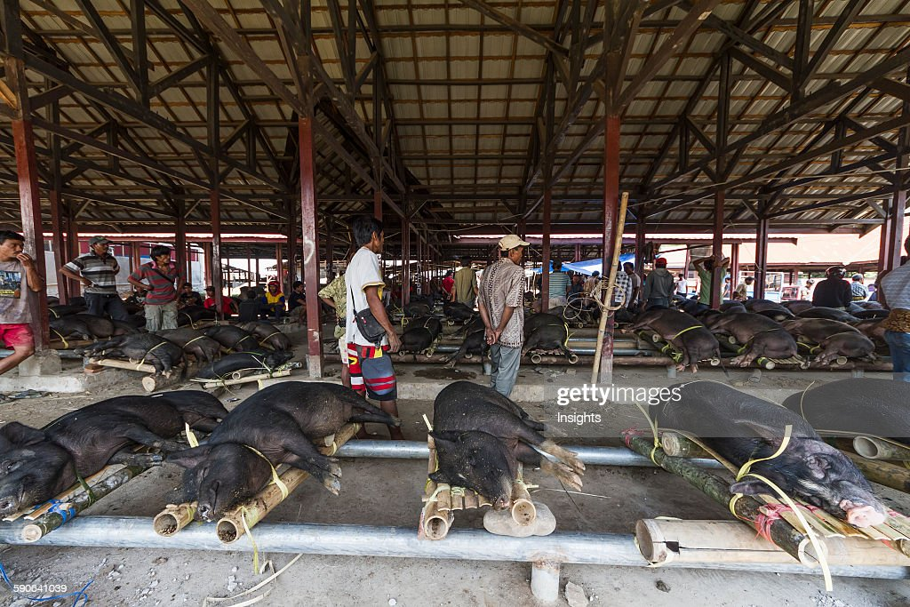 Pigs at the Bolu livestock market. : News Photo