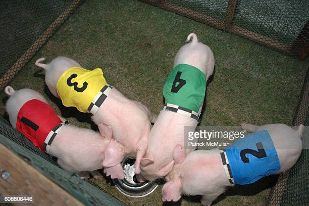 Pigs attends NEIMAN MARCUS 100th Anniversary Pardner Celebration at Cotton Bowl Stadium on October 11 2007 in Dallas TX