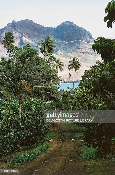 Pigs crossing a road flanked by vegetation with mountains in the background Nuku Hiva island Marquesas islands French Polynesia