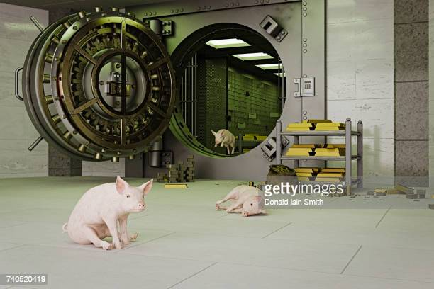 pigs escaping from vault - greedy smith stock pictures, royalty-free photos & images