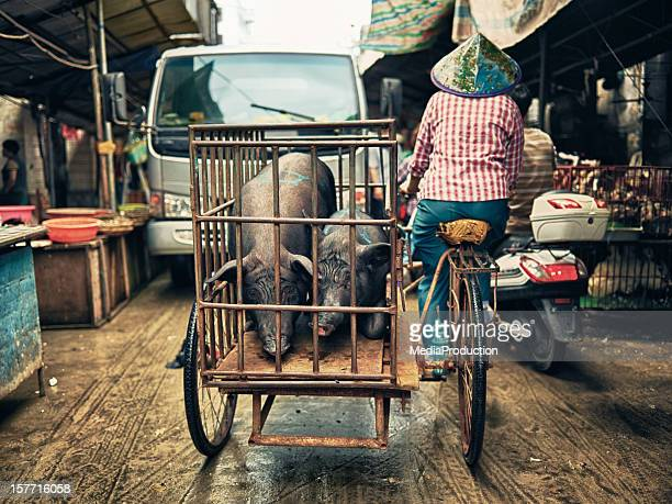 pigs in a cage - haikou stock pictures, royalty-free photos & images